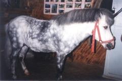 Буян пони